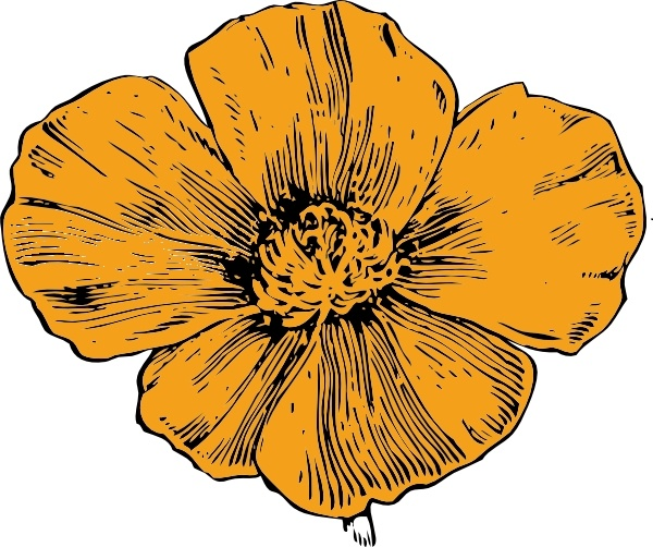 California california poppy