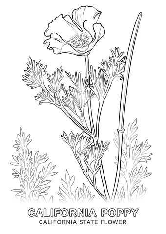 Coloring page free printable. California clipart state california flower