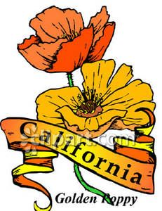 Royalty free picture . Poppy clipart state california flower