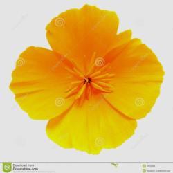 California clipart state california flower. Ca clip art gardening