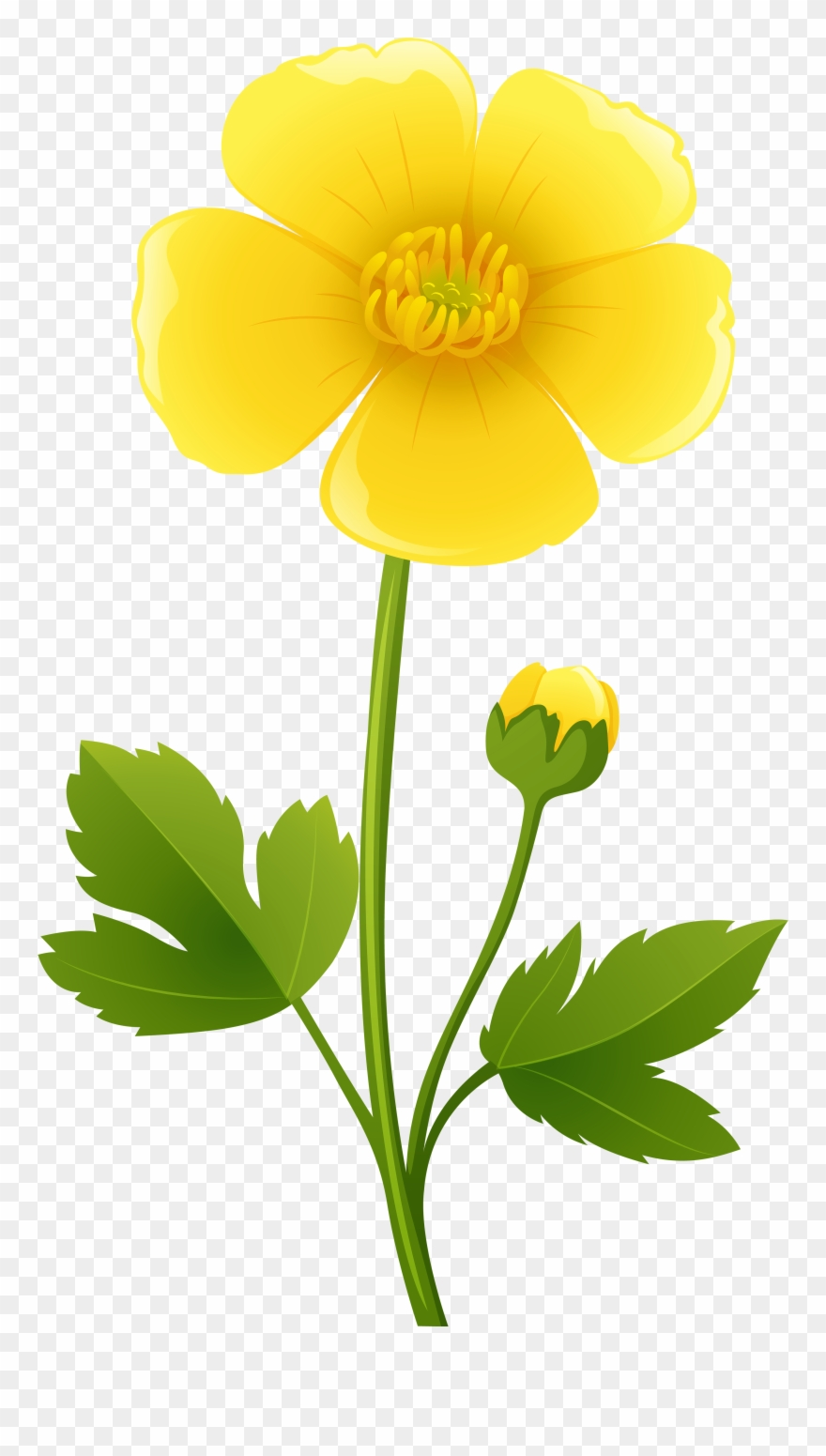 Freeuse library . California clipart state california flower