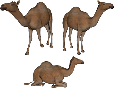 Camels gallery isolated stock. Camel clipart 3 camel