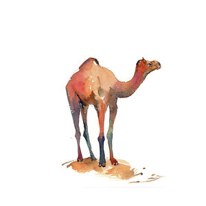 Art fine america posters. Camel clipart baby camel