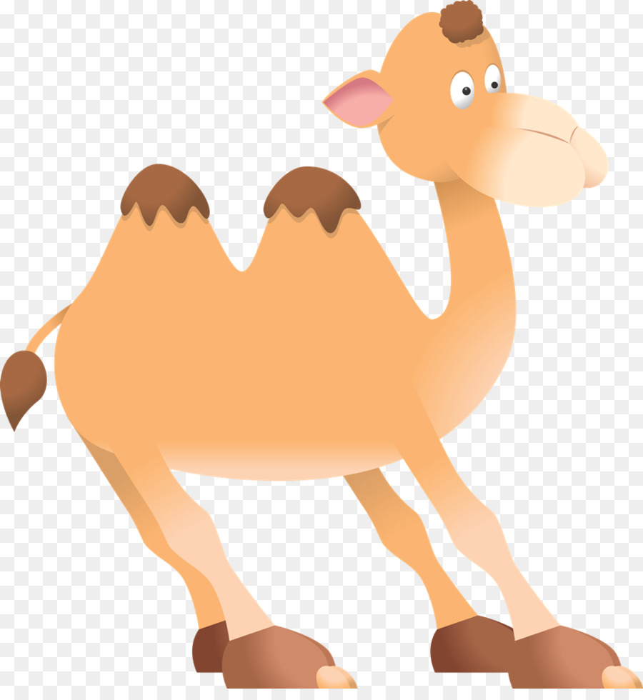 Hand child transparent clip. Camel clipart baby camel