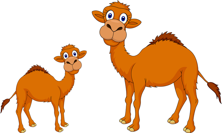Funny a and his. Camel clipart baby camel