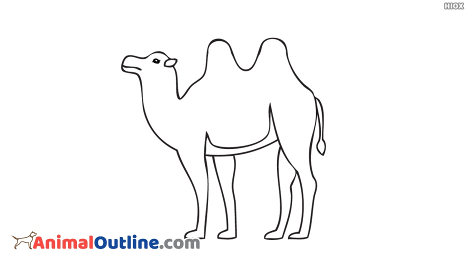 Animal outline pictures images. Camel clipart bactrian camel