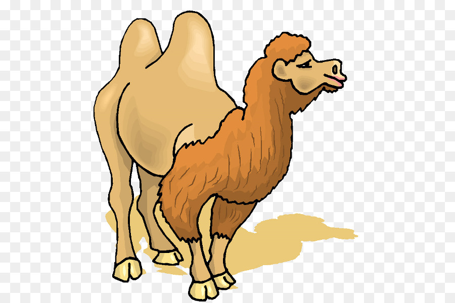 Camel clipart bactrian camel. Clip art png download