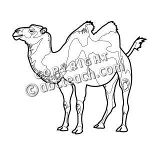 Clip art b w. Camel clipart bactrian camel