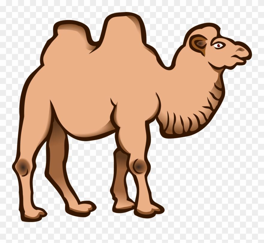 Dromedary cartoon download drawing. Camel clipart bactrian camel