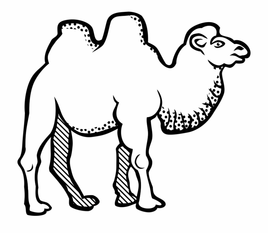 Animal bactrian . Camel clipart black and white