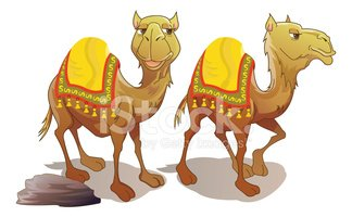 Two camels smiling stock. Camel clipart brown