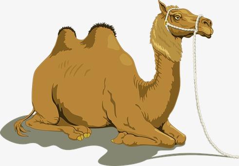Camel clipart brown. Desert animal png image