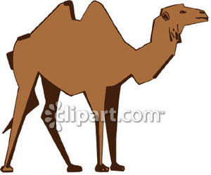 Bactrian panda free images. Camel clipart brown