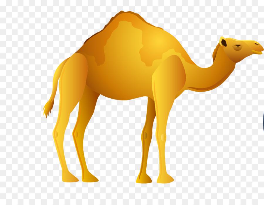 Camel clipart camel egyptian. Egypt clip art png
