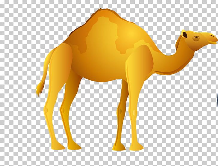 Egypt png ancient animals. Camel clipart camel egyptian