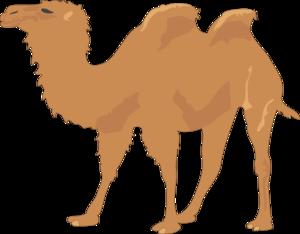 At clker com vector. Camel clipart clip art