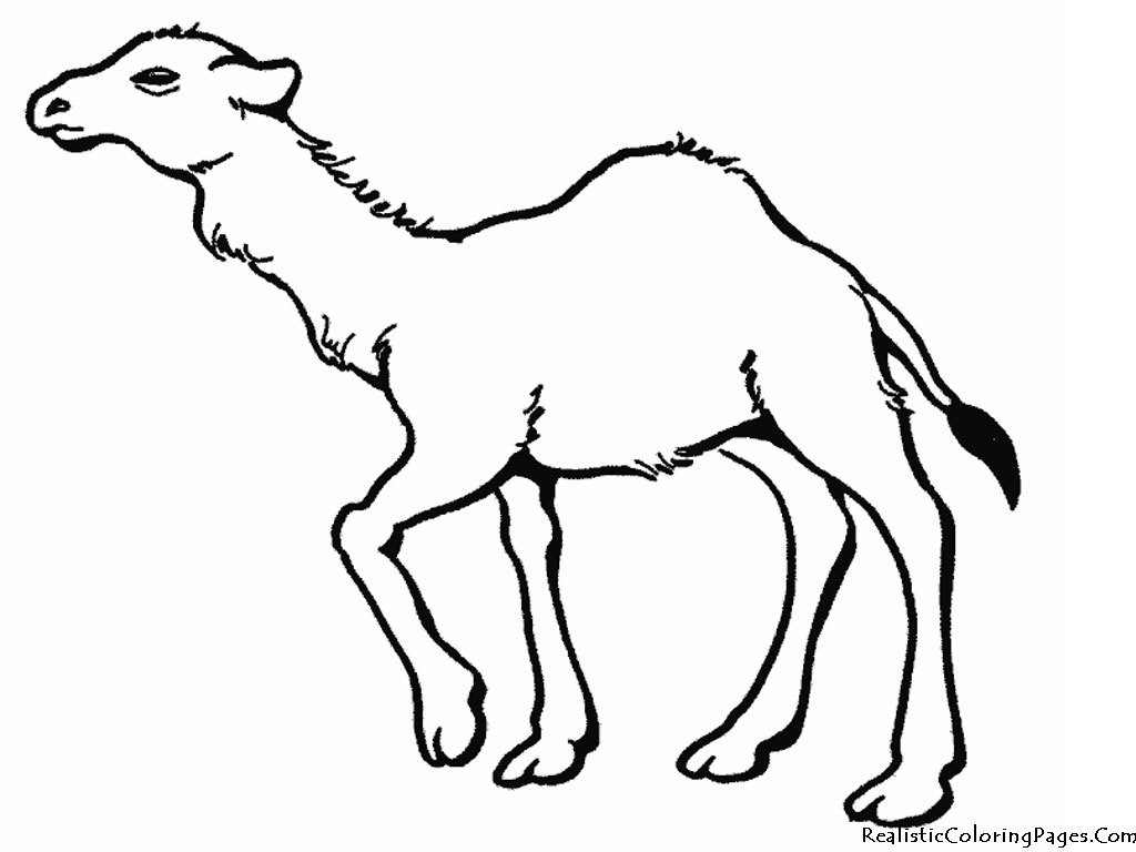 Camel clipart colouring page. Free pictures to print