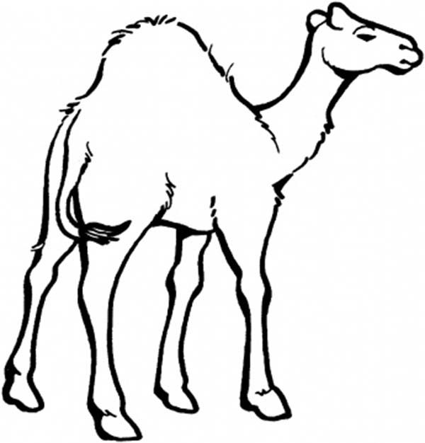 Camel clipart colouring page. Pin on midnight at