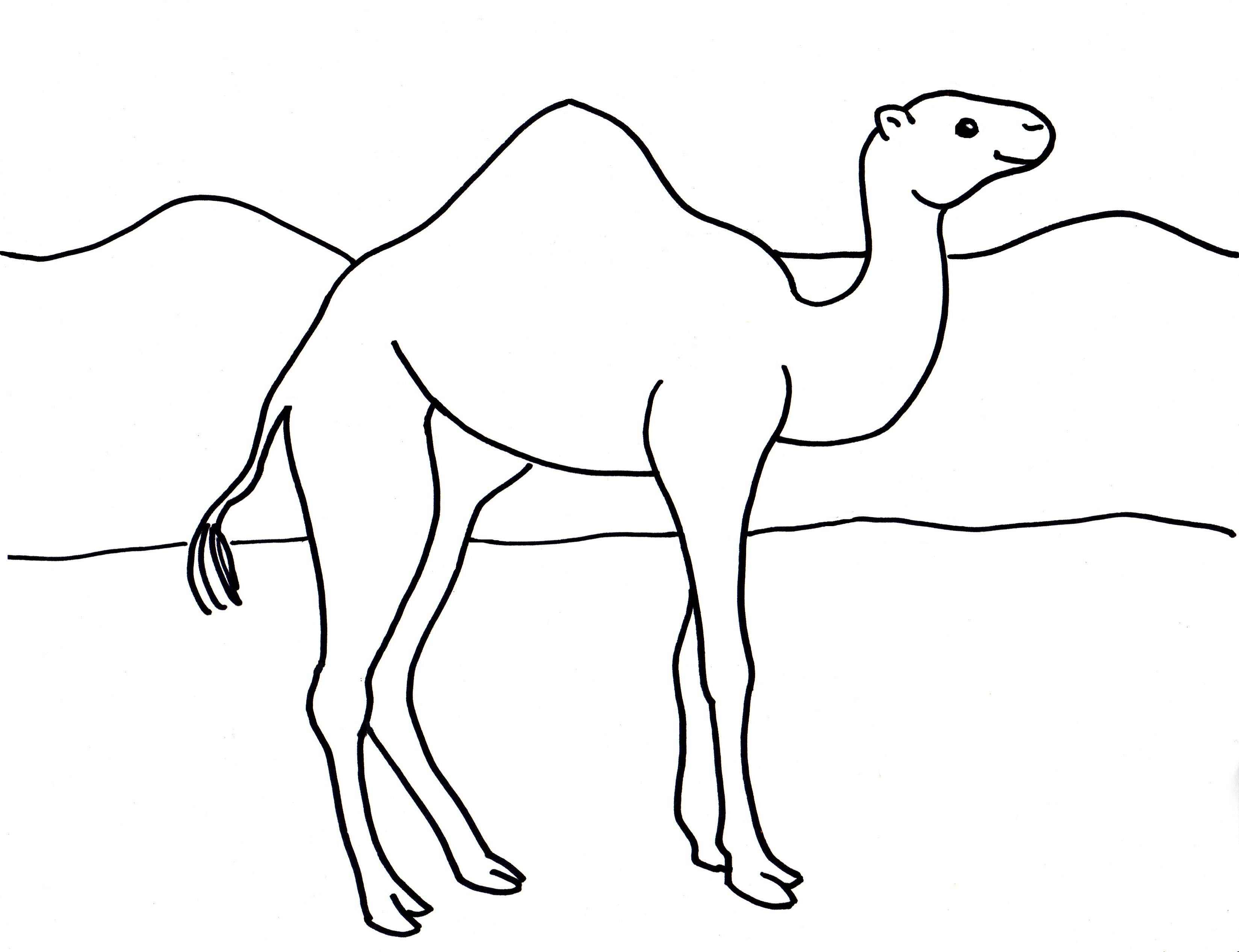 Camel clipart colouring page. Last chance pictures to