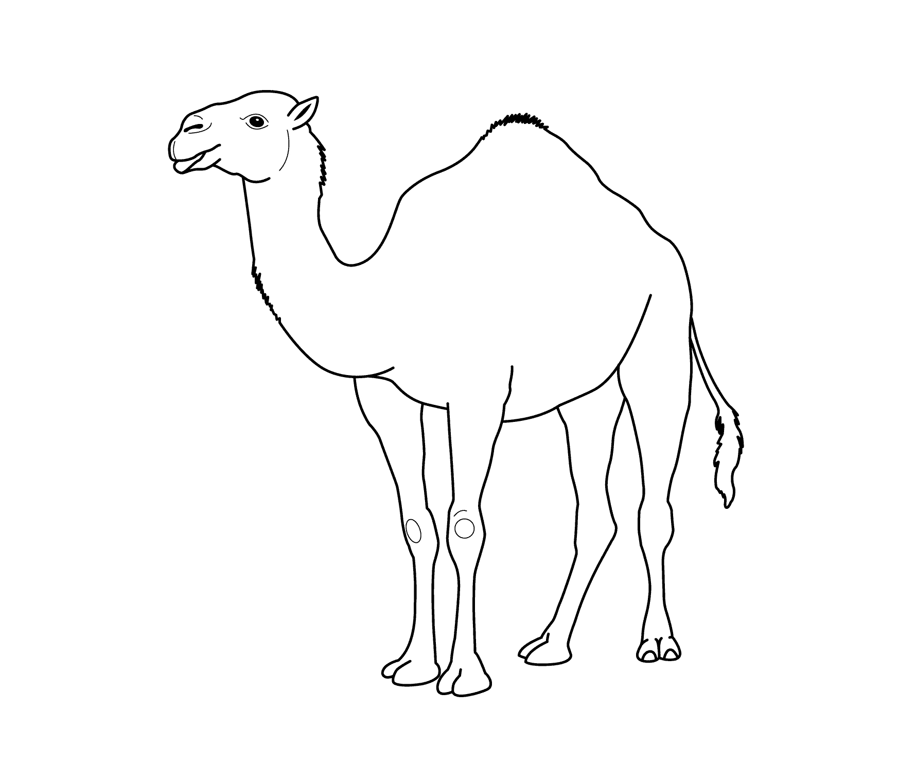 Coloring pages pencil and. Camel clipart colouring page
