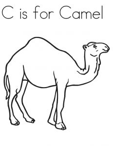 Direct free pictures to. Camel clipart colouring page