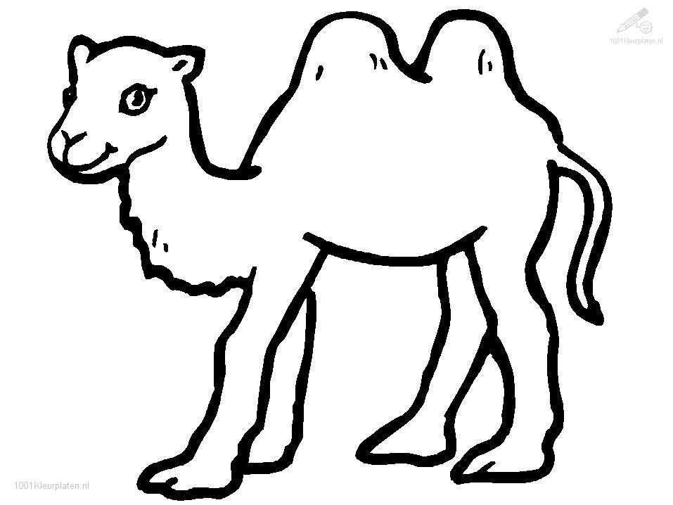 Pin on beauty . Camel clipart colouring page