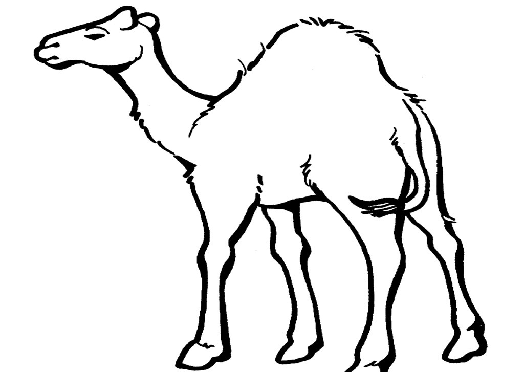 Free pictures to print. Camel clipart colouring page