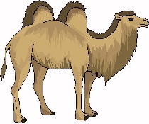Camels edhelper com known. Camel clipart desert camel