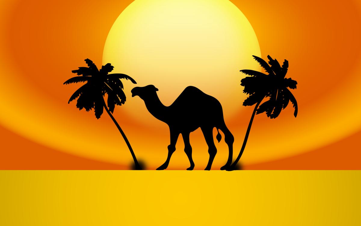 Computer wallpaper silhouette livestock. Desert clipart desert arabian