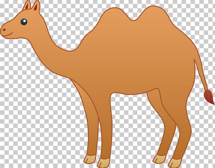 Bactrian cartoon png arabian. Camel clipart drawing