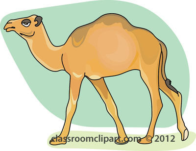 Clipground classroom. Camel clipart dromedary camel