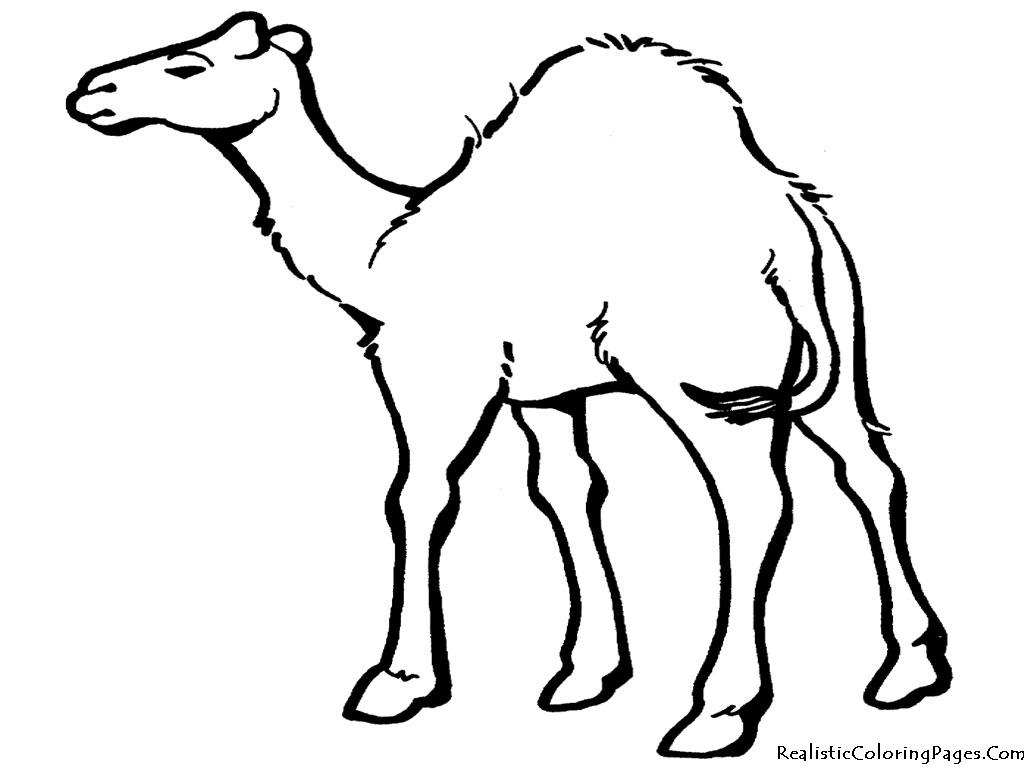 Camel clipart gambar. In desert drawing at