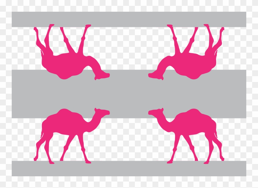 Camel clipart pink. Png download
