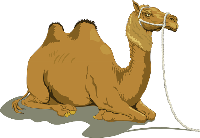 Free to use clip. Camel clipart she