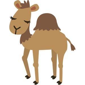 Camel clipart she.  best camels images