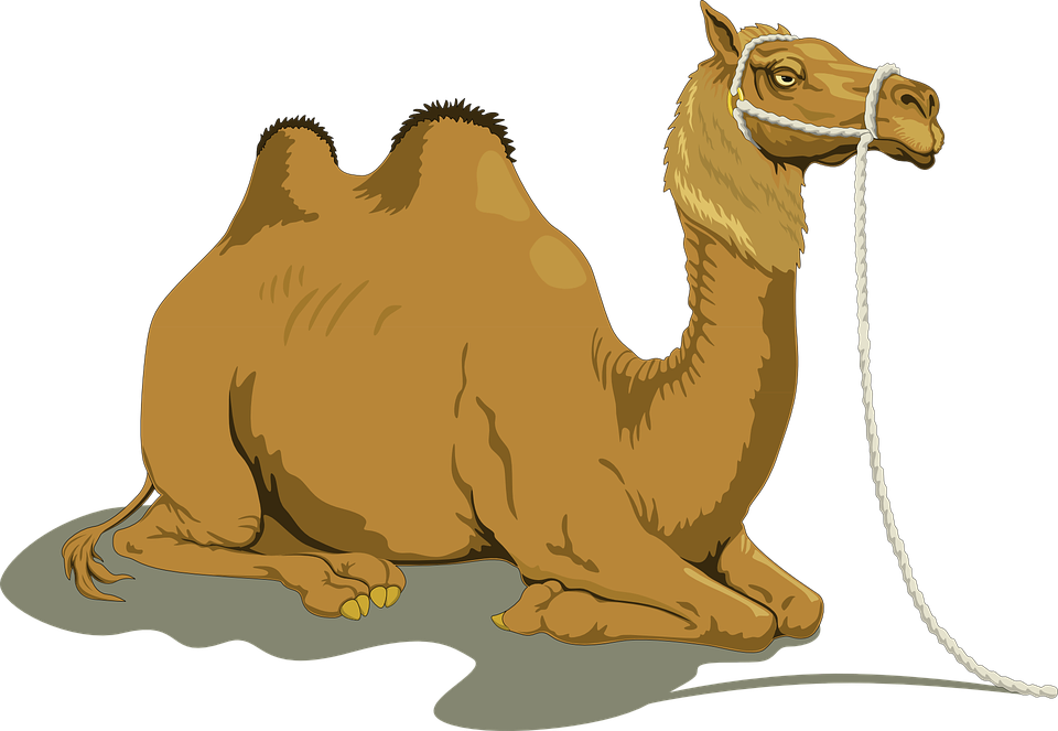 Camel clipart she. Muslim and money s