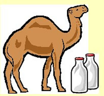 Milk transforms mauritania s. Camel clipart she