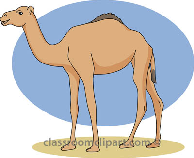 Pencil and in color. Camel clipart she