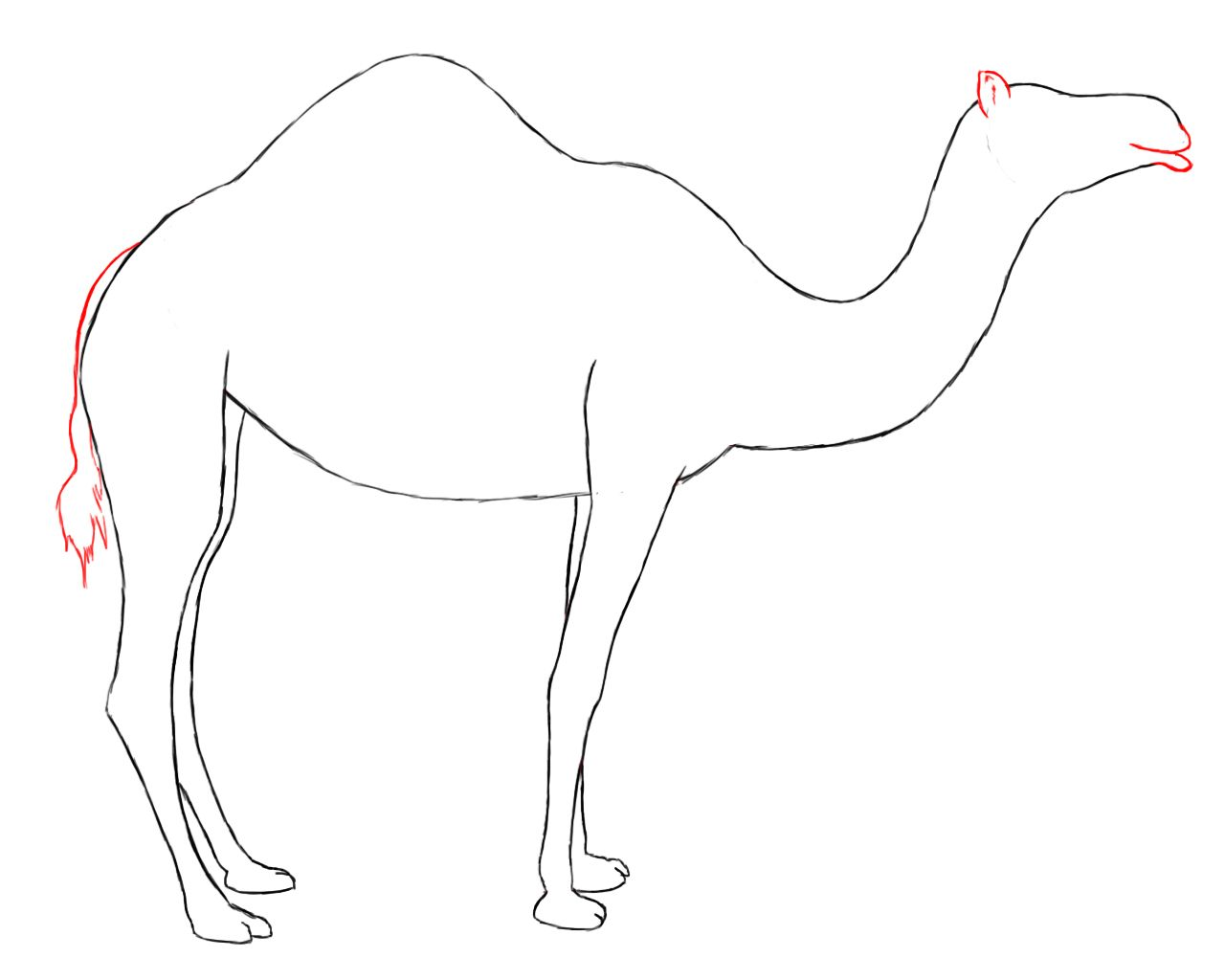How to draw a. Camel clipart simple