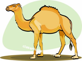 Camel clipart simple. Geico free