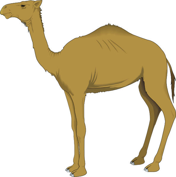 Sketches of camels in. Silhouette clipart camel