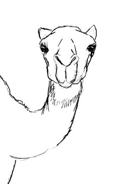 Today s tutorial will. Camel clipart sketches
