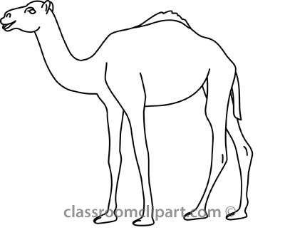 Drawing outlines of animals. Camel clipart sketches