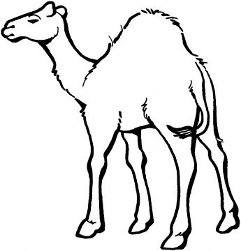 Drawings of camels coloring. Camel clipart sketches