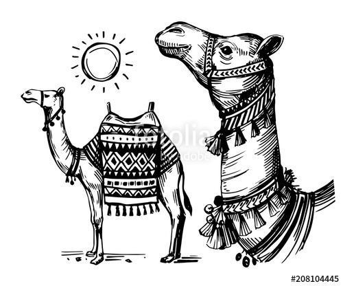 Camel clipart sketches. Sketch of stock image