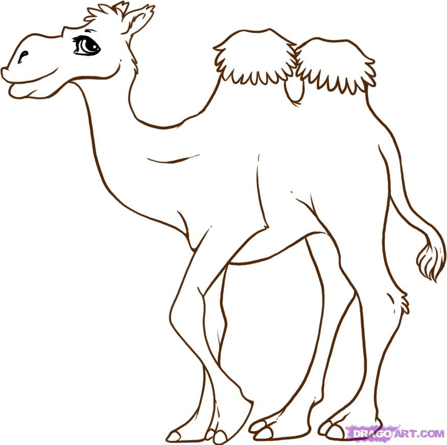 Camel clipart sketches. Free drawing of animal