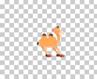 Png images free download. Camel clipart small camel