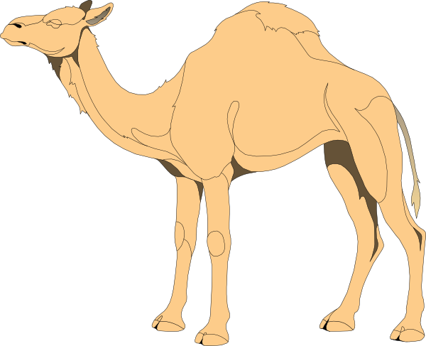 Camel clipart small camel. Clip art at clker