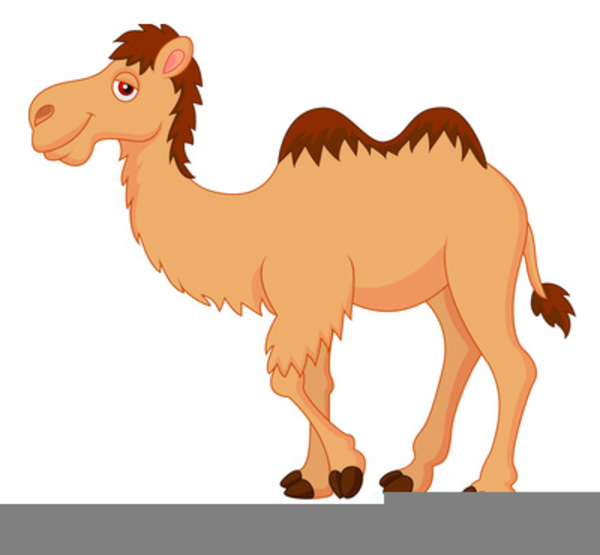 Camel clipart small camel. Cartoon free images at