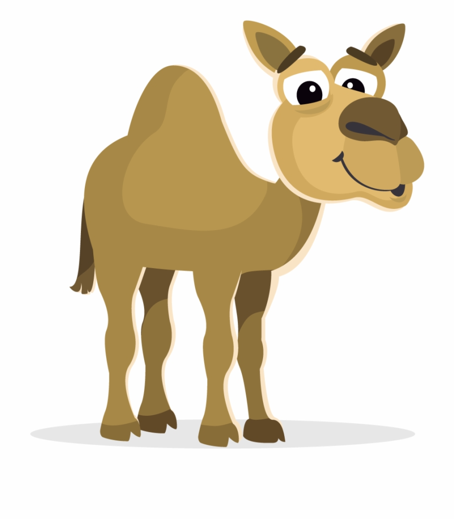 Mammal zoo animal hd. Camel clipart transparent background